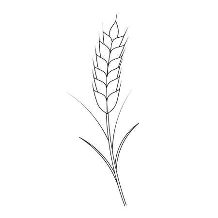 Ear of wheat. A cereal crop needed to make flour. Vector illustration. Outline on an isolated white background. Doodle style. Sketch. Coloring book for children. Gathering the summer harvest. Ilustração