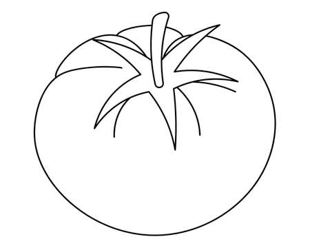 A tomato. Vector illustration. Outline on an isolated white background. Doodle style. Sketch. Vegetable culture of the genus Solanaceae. Vegan food. A healthy vegetable with a shank. Harvesting.