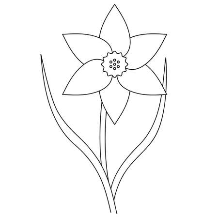 Narcissus. Sketch. Delicate flower with a curly core. Vector illustration. Coloring book for children. Nice plant. Doodle style. Outline on an isolated white background. Light Easter.