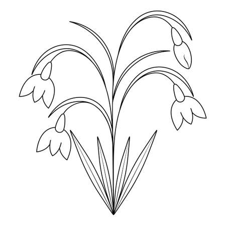 Snowdrops. Sketch. Spring flowers. Vector illustration. Coloring book for children. Delicate plant. Doodle style. Outline on an isolated white background. Light Easter. Black and white illustration. Ilustração