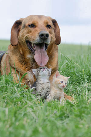 Friendship between dog and kittens