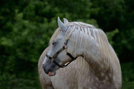 gelding: Looking back