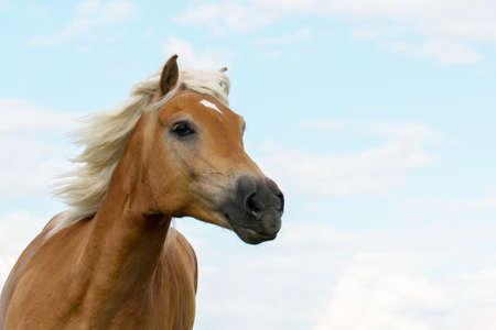 Horse (Equus) Reklamní fotografie - 123583098