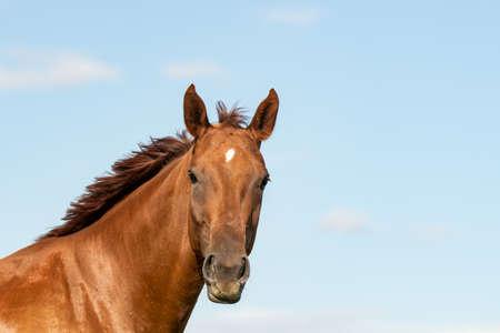 Horse (Equus) Reklamní fotografie - 123583149