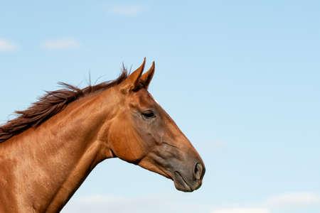Horse (Equus) Reklamní fotografie - 123583150