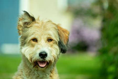 Domestic dog (Canis lupus familiaris) Foto de archivo - 123583153