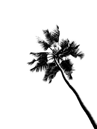 Contour of plamtree isolated on white