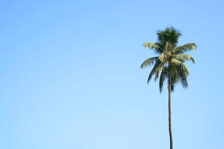 Single palmtree with a clean sky