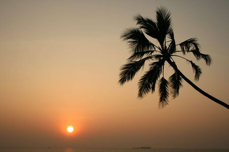 contemplated: Palmtree is contemplated by sunset