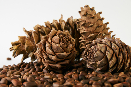 Pine nuts and ripe pine cones Stock Photo