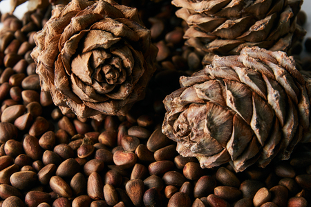 Pine nuts and ripe pine cone