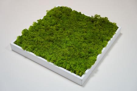 Grüne Moosgras-Texturdekoration in quadratischer Holzkiste auf weißem Tischhintergrund mit Kopierraum Standard-Bild