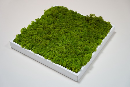 Green moss grass texture decoration in square wood box on white table background with copy space