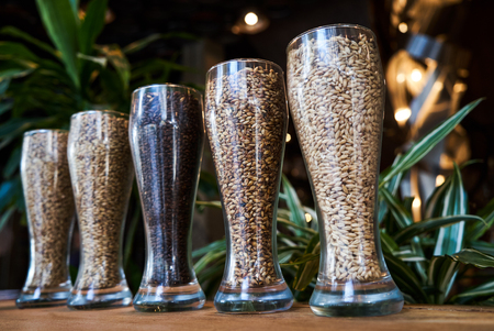 Beer glasses filled with different malts and hops, close-up. Brewery interior and equipment. Oktoberfest beer glasses with wheat and hops