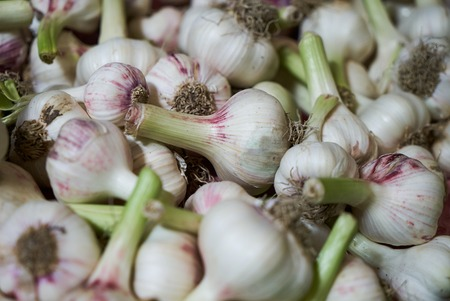 Fresh garlic texture background, close-up. Pile of white garlic heads. farming and agriculture