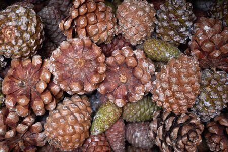 Christmas background with Pine cones in wooden box, close-up. Fir and spruce cone