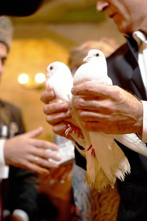 White doves in the groom hands, close-up. Wedding doves for love