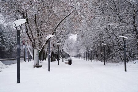 Winter park alley with snowy park benches and street lamp post lanterns Zdjęcie Seryjne