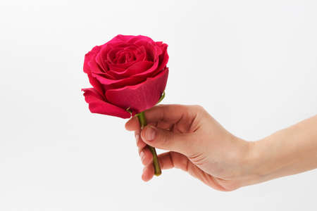Hand with pink rose on white background with copy space. Hand giving red rose flower. Valentines day flower Foto de archivo