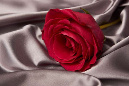 Pink rose on gray silk background with copy space. Beautiful red rose flower. Valentines day flower