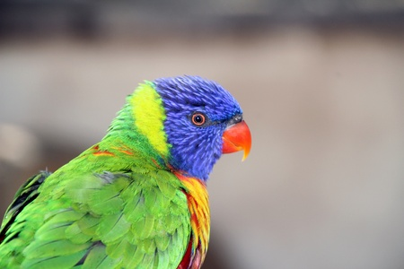 Lorikeet Aviary photo