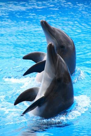Dolphins Standard-Bild