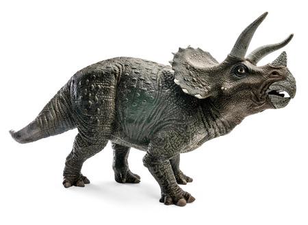 Wide view of Triceratops dinosaurs toy isolated on white background with clipping path.