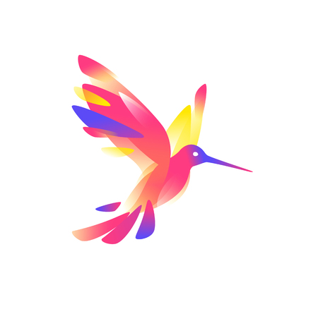 Illustration of a pink colibri.