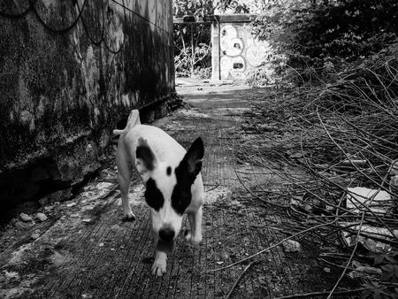 romp: Dogs romp