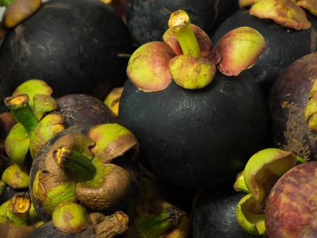colloquially: The purple mangosteen Garcinia mangostana colloquially known simply as mangosteen is a tropical evergreen tree believed to have originated in the Sunda Islands and the Moluccas of Indonesia. It grows mainly in Southeast Asia and also in tropical South Ame Stock Photo