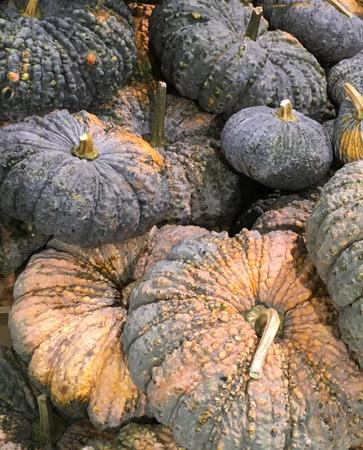 Pile of Fresh Pumpkins at a market Stock Photo