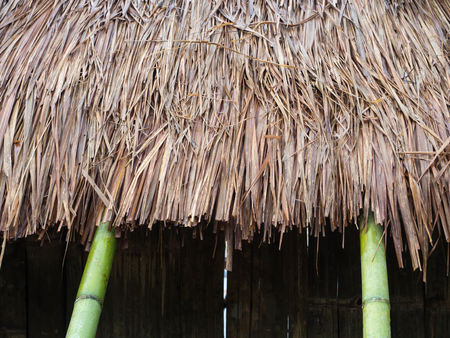 thatch: closeup of thatch roof background