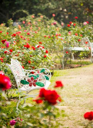 atmosphere: Giardino di rose in un'atmosfera rilassante