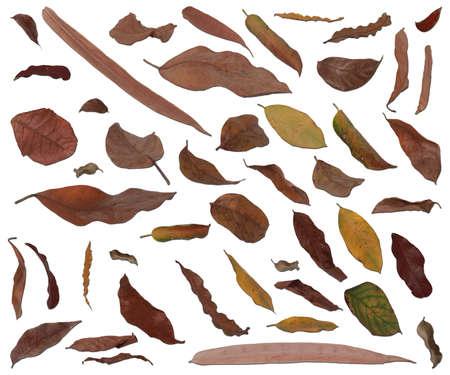 hojas secas: Las hojas secas aisladas en fondo blanco Foto de archivo