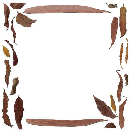 leaves frame: Marco de hojas secas sobre fondo blanco