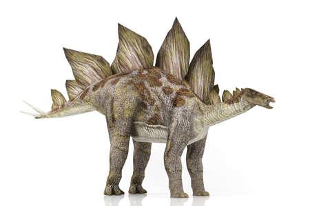 stegosaurus: Modelo 3D Stegosaurus aislado en fondo blanco