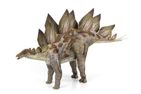stegosaurus: Stegosaurus  Foto de archivo