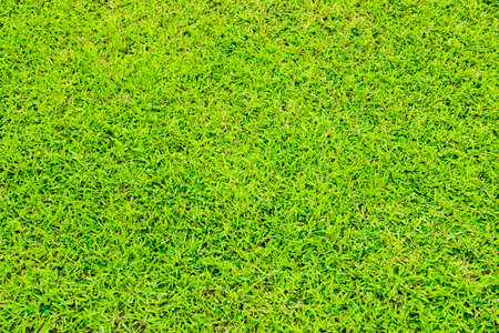 meadowland: Green grass background