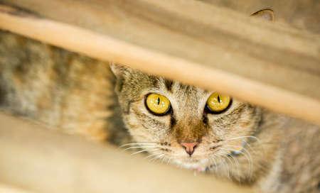 Domestic cat hiding itself 写真素材