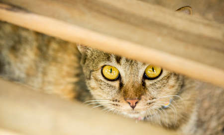 Domestic cat hiding itself Zdjęcie Seryjne