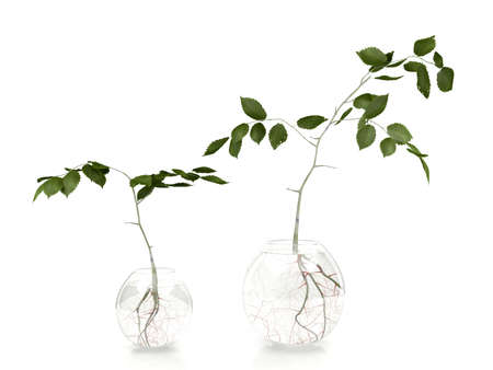 fibrous: Green leaves plants in glass vases on white background
