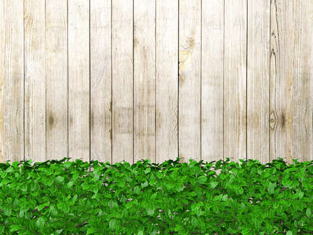 ornamental bush: White wooden board background with green plant leaves at the bottom. Wooden fence covered with plants and copy space, 3D rendering