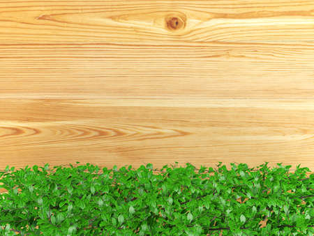 ornamental bush: Wooden board background with green bush plant leaves at the bottom. Wooden board covered with ornamental bush plants and copy space, 3D rendering Stock Photo
