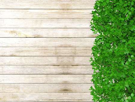 ornamental bush: White wooden board background with green plant leaves. Wooden fence covered with plants and copy space, 3D rendering Stock Photo