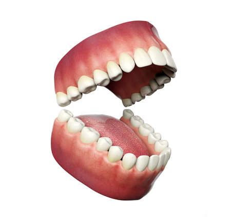Human teeth opening isolated on white background, 3D rendering Stock Photo