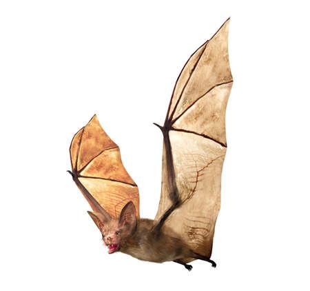 白い背景に分離された飛行の吸血コウモリ 写真素材