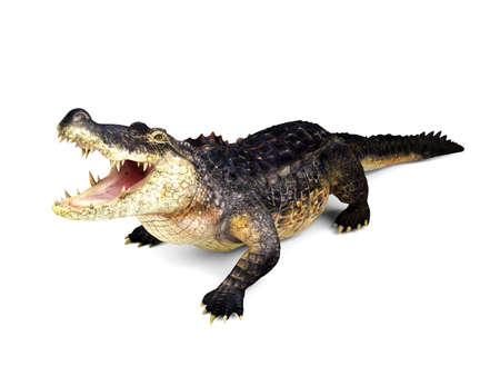frightful: Crocodile isolated on white background, 3D rendering