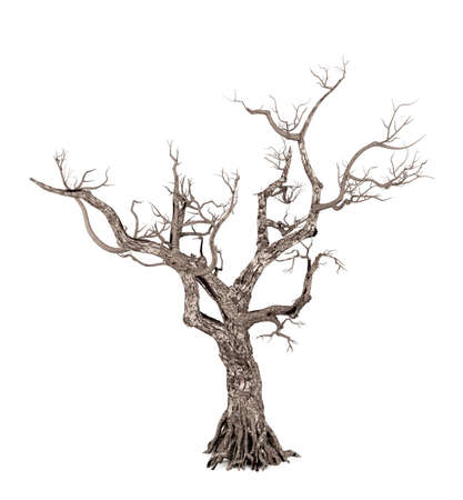 Dead tree isolated on white background, 3D rendering Stock Photo