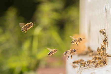 bee hive: bees flying towards bee hive