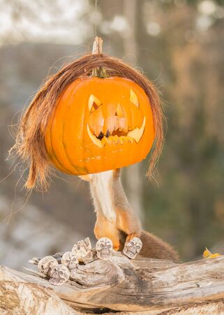 red squirrel standing on  skulls and tree trunk with a pumpkin head Stock Photo